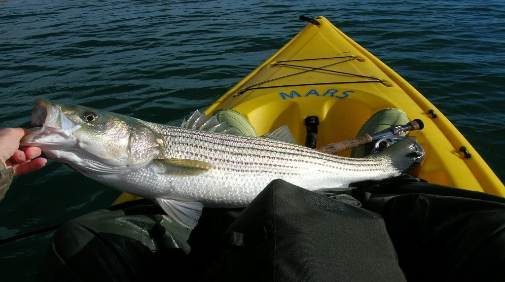 Bass Fishing Tips - conclusion
