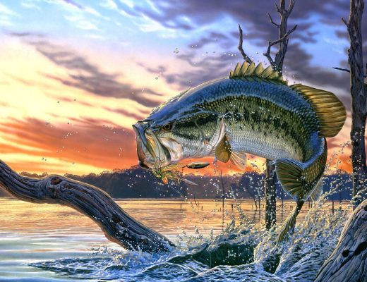 Bass Fishing Tips