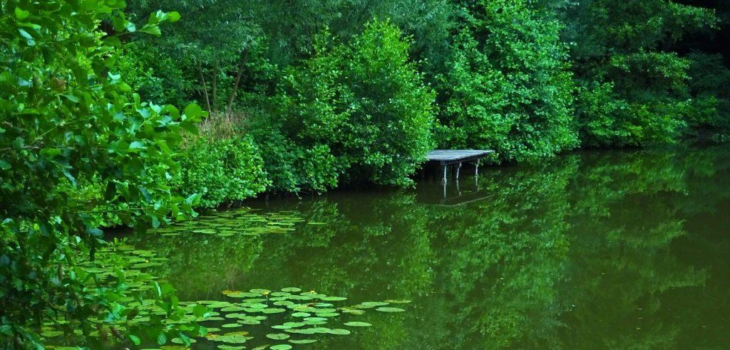 Bass Fishing Pond