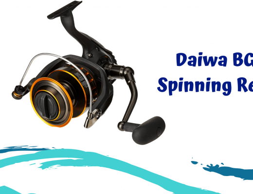 Daiwa BG Spinning Reel Review- Fishing For Sport